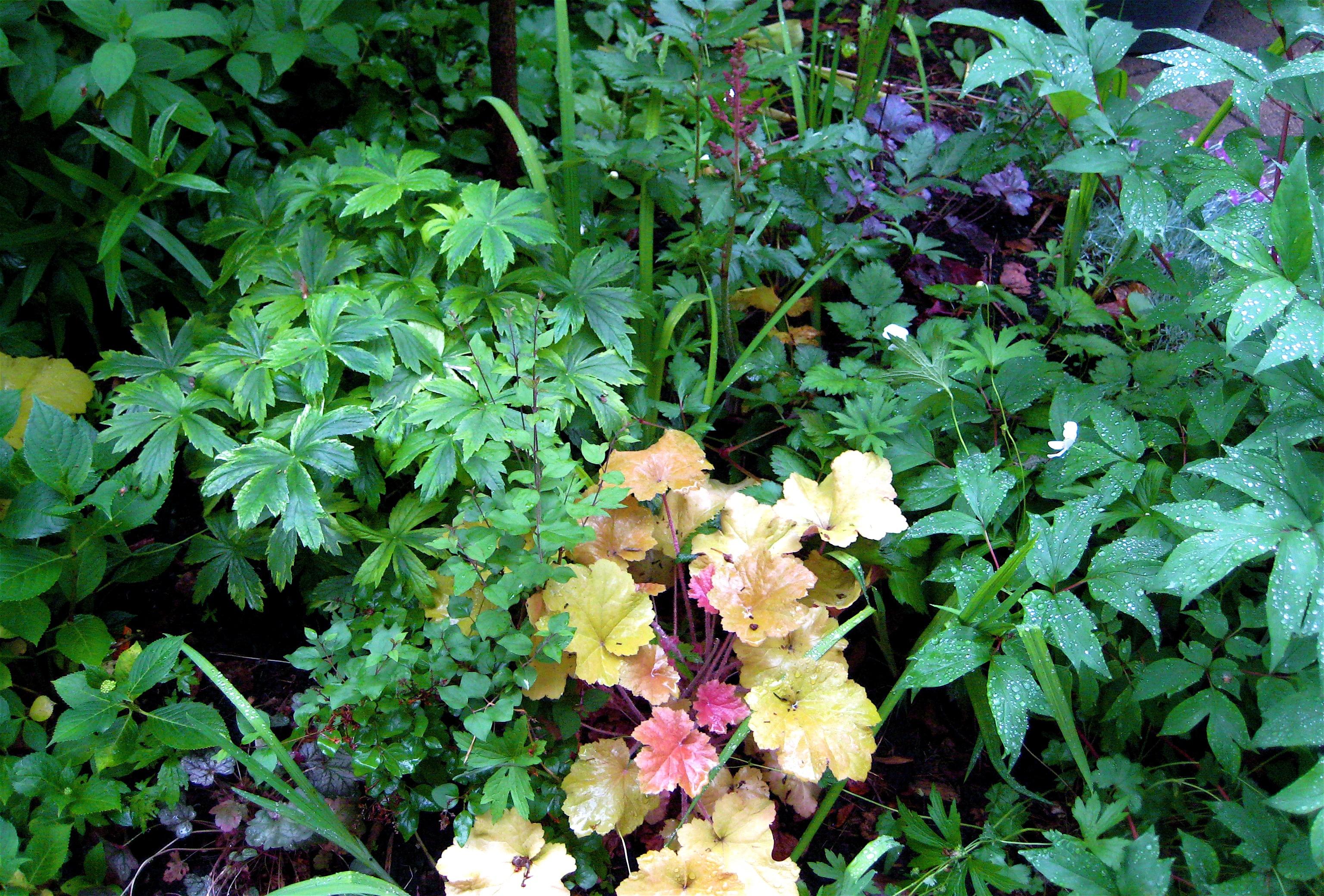 Aldona Satterthwaite Gardening From A Hammock