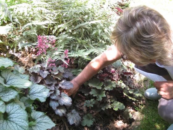 So much going on in every inch of Lorraine's garden