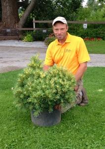 Darren Heimbecker with Pinus Parniflora 'Ogon Janome'