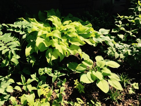 Garden June 6, 2015 Sum and Substance