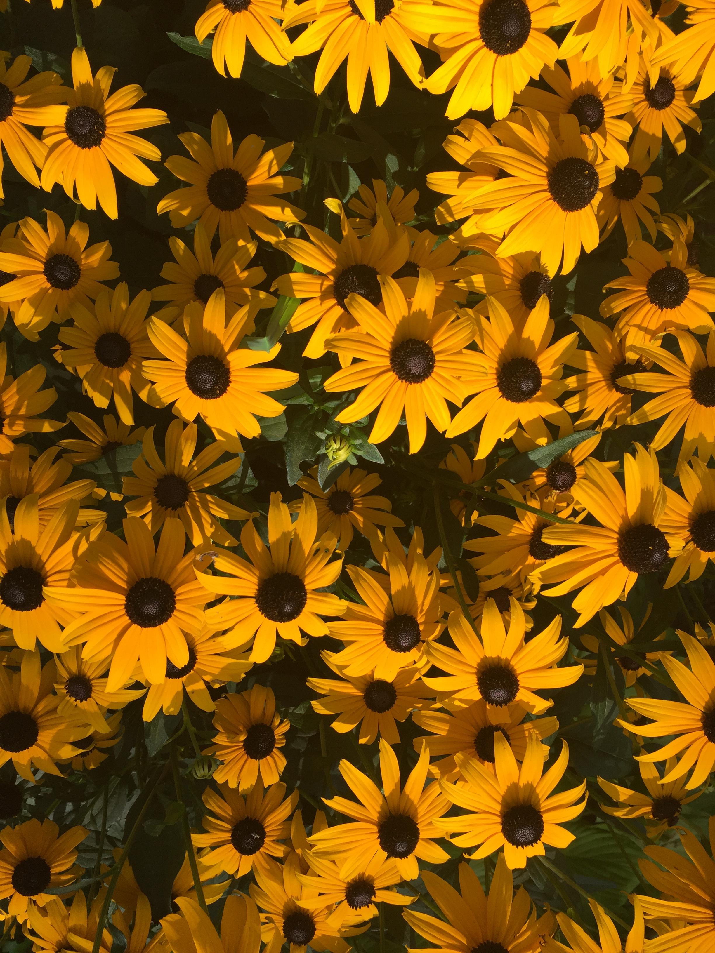Gardening | Gardening from a Hammock